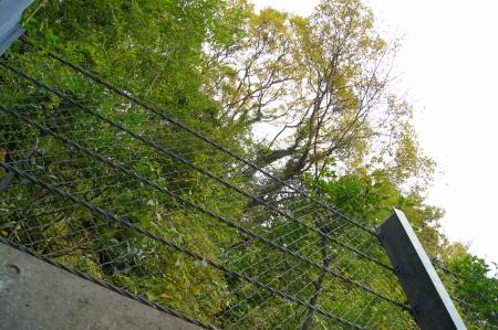 傾斜木 伐採撤去