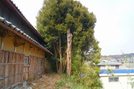 三重県伊賀上野 大木伐採作業