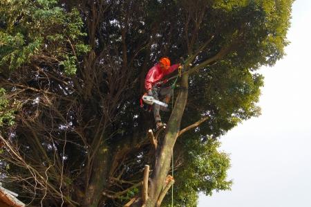 """ちょいっと登って、アーボリストじゃなくて""""木こり""""です"""