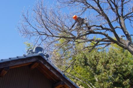 屋根に被さった枝の処理