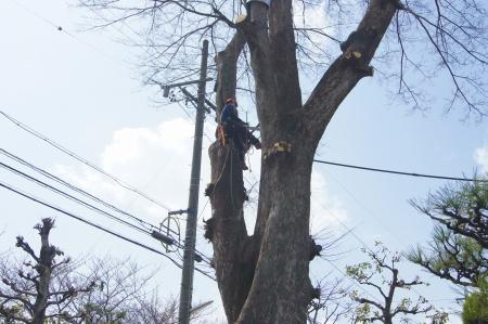剪定作業開始!隣の電柱16メートル