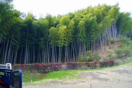 孟宗竹 竹林整備・伐採