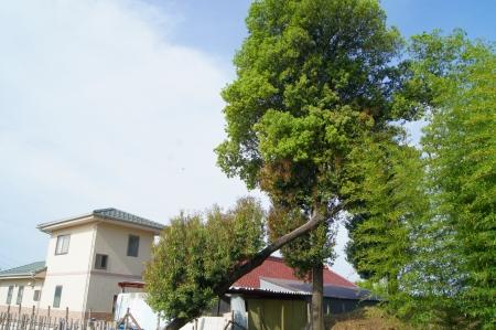 愛知県 大口町 伐採作業