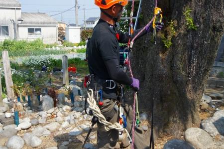 細い通路から限られたポイントをGETして tree on!
