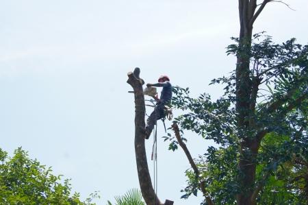 伐採士にはスパイクこそ必須アイテム