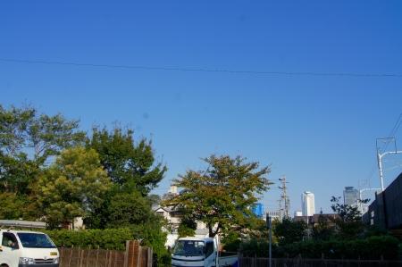 名古屋の高層ビル群を眺めつつ伐採作業