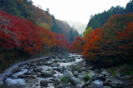 朝靄 紅葉の山道を駆け上がりつつ