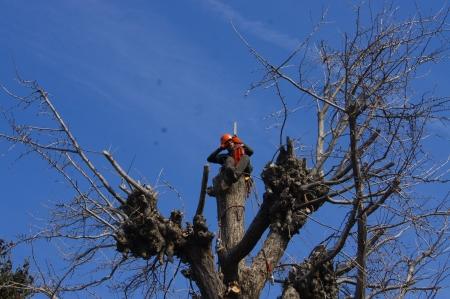 樹上で刃を研ぐ事なんて滅多に無いけども