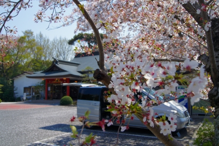 桜もヒラヒラと散り急ぎ、オイラの頭も散り急ぎ・・・