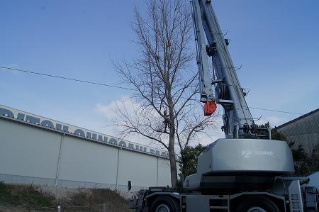 クレーン伐採作業