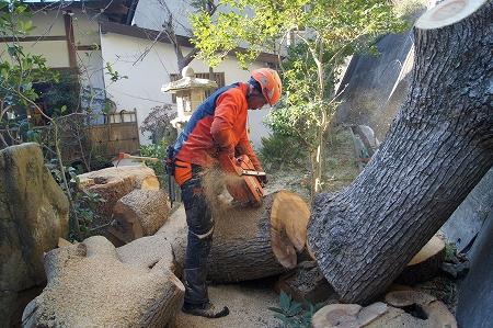 狭い処の大木伐採が専門です