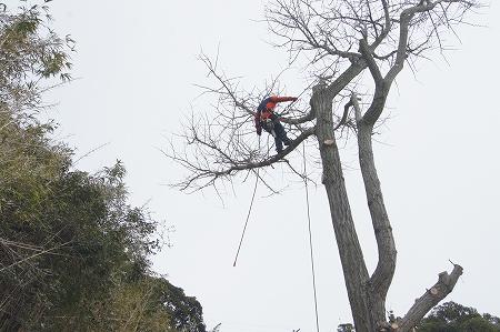 木登りが専門です、キチンと仕事は致します