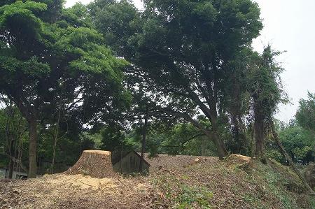 傾斜木伐採作業 愛知県