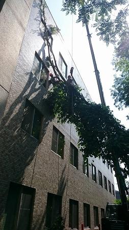 緊急 伐採作業 名古屋