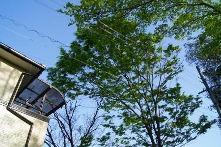 住居、電線に被さる樹木の撤去