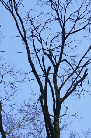 住居に傾いた枯れて折れた木の撤去