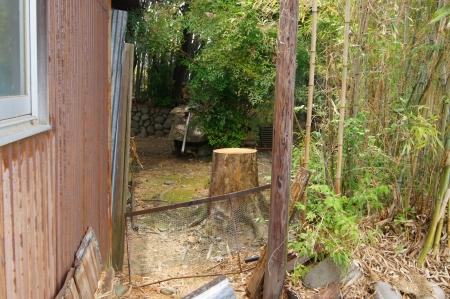 住居脇の枯れ木
