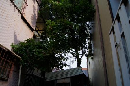 住宅地の支障木伐採