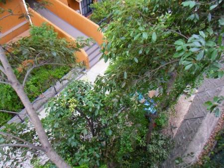 名古屋市昭和区 伐採、剪定 樹上より1