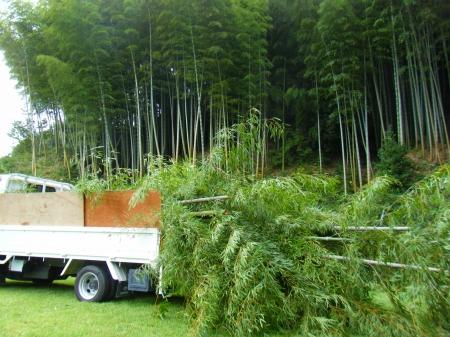 竹林伐採 整備