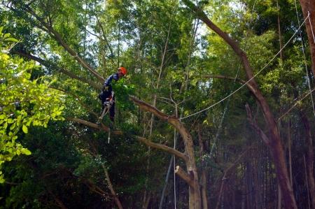 左側の立ち木の処理