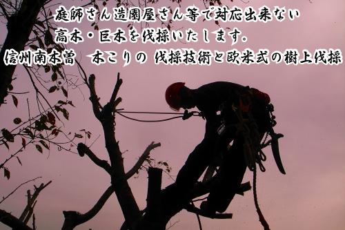 庭師さん造園屋さんに断られた樹木の伐採いたします。