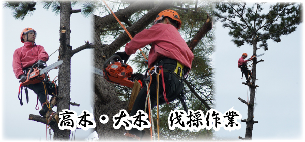 高木 大木 特殊伐採