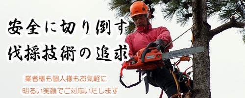 名古屋市 愛知県の樹木伐採作業はお任せ下さい。