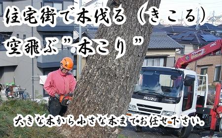住宅街で伐採作業はお任せ下さい。